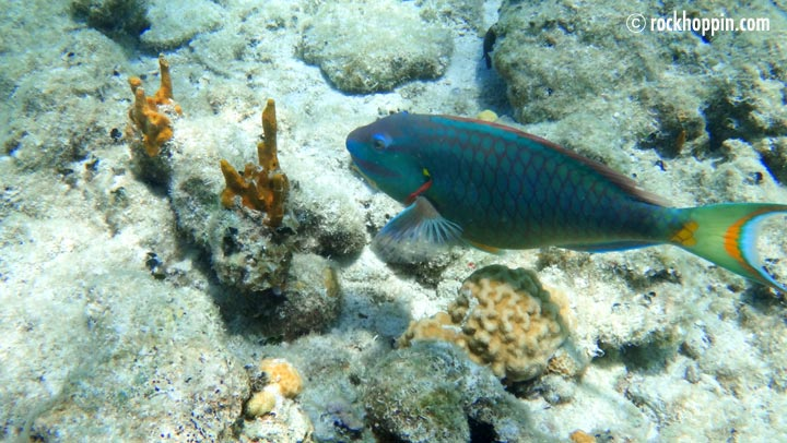 snorkeling-trip-stjohn-usvi