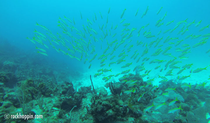 Snorkeling Trips - St. John, USVI