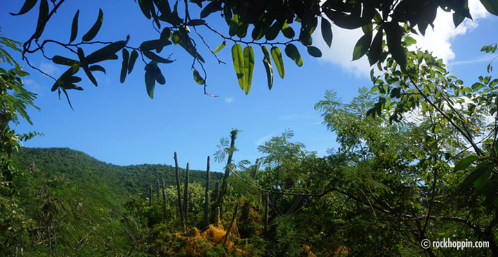 reef-bay-trail-hike-petroglyphs-waterfall-stjohn-usvi