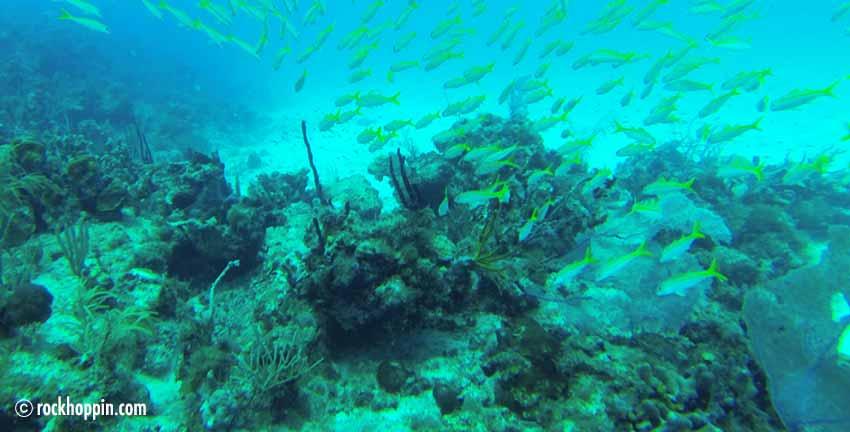 snorkeling-trip-stjohn-boat-rental